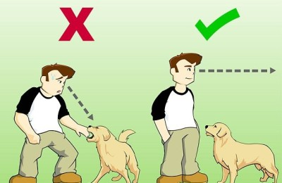 629px-Stay-Safe-when-a-Dog-Approaches-You-Step-2